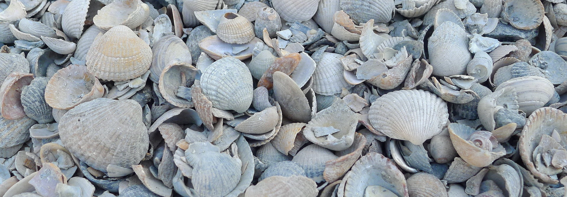 home dec shells dutch mix 15 kg