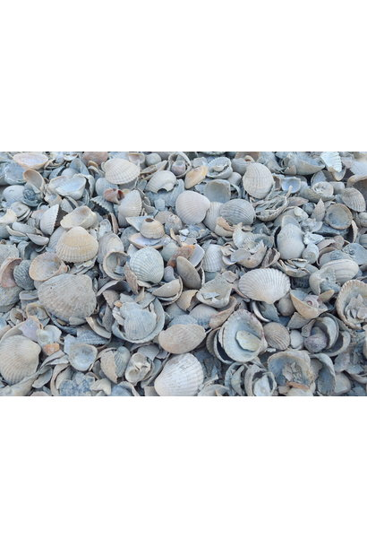 ornamental stones beach shells 15 kg