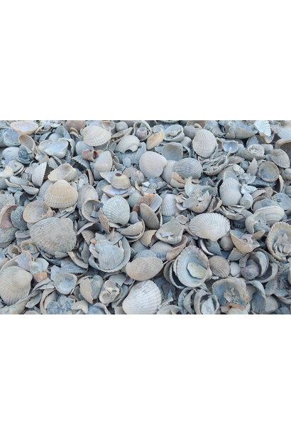 Ziersteine Strand Muscheln 15 kg