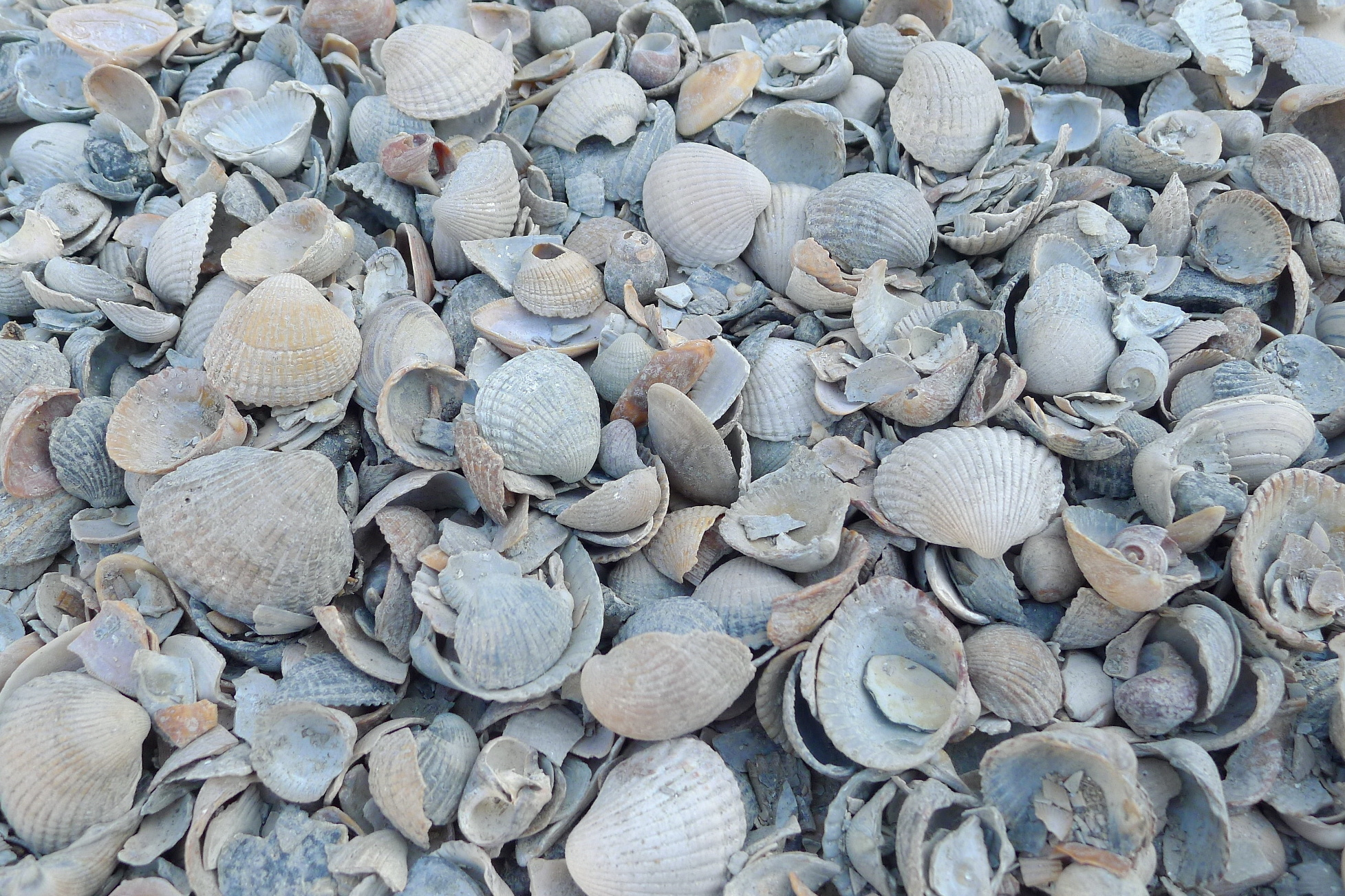 home dec shells dutch mix 15 kg-1
