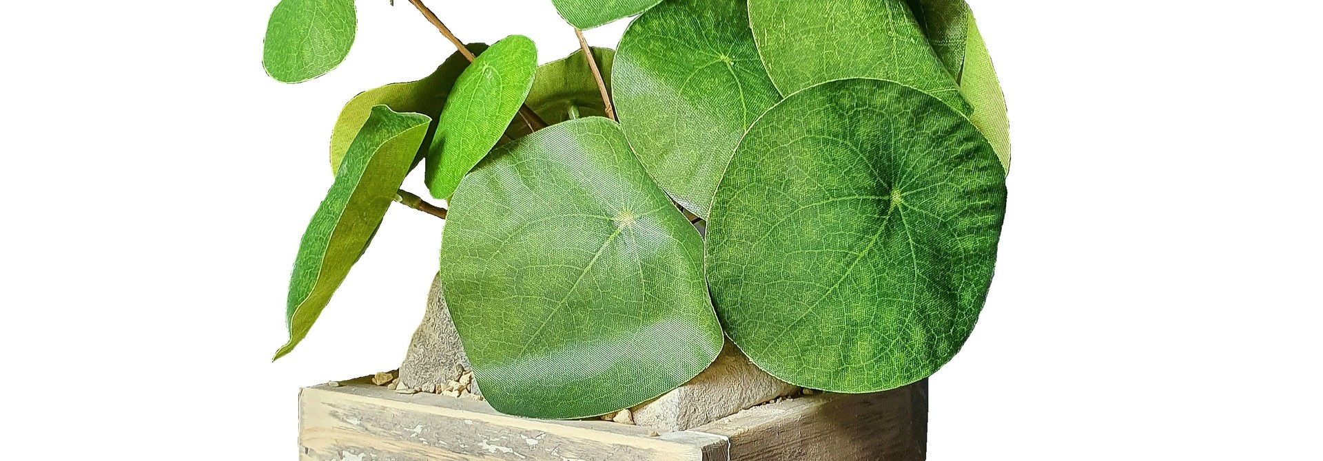 silk arr	old dutch	pilea J13