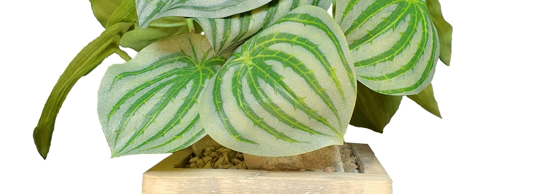silk arr	old dutch	peperomia J13