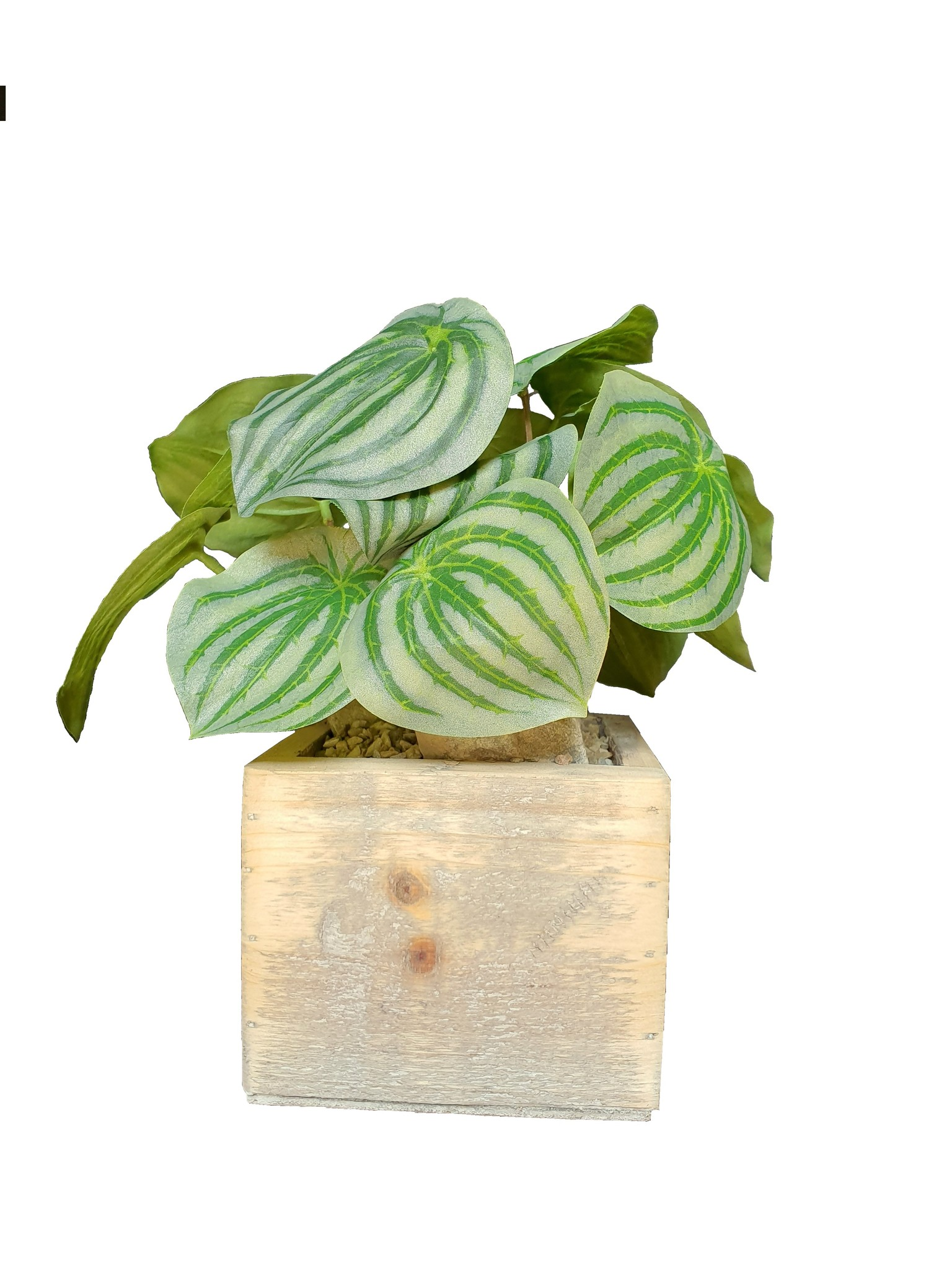 silk arr	old dutch	peperomia J13-1