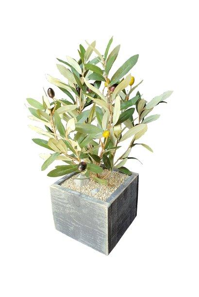 Olive in pot