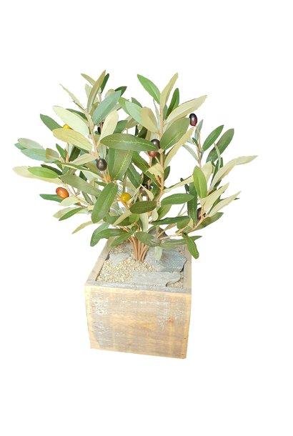 Olive in Topf