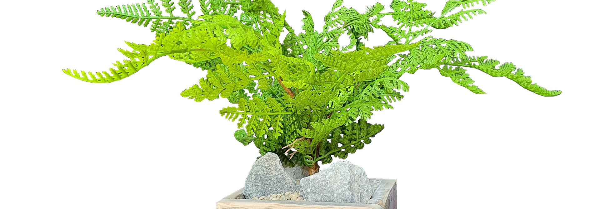 silk arr	old dutch	fern forest J13