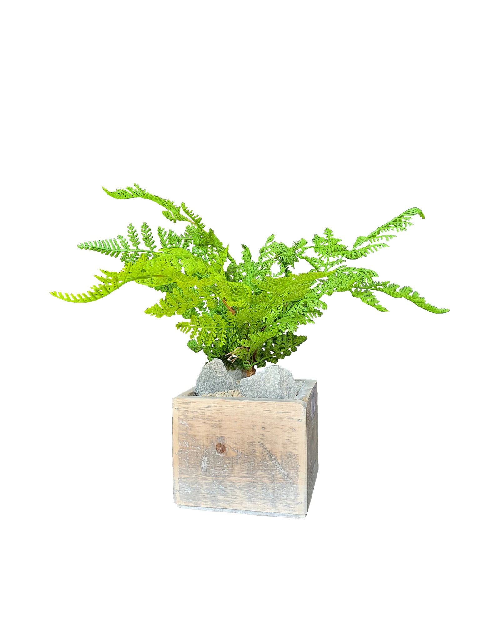 silk arr	old dutch	fern forest J13-1