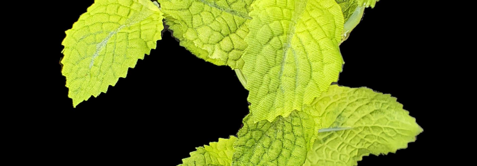 Mint pick green 28cm