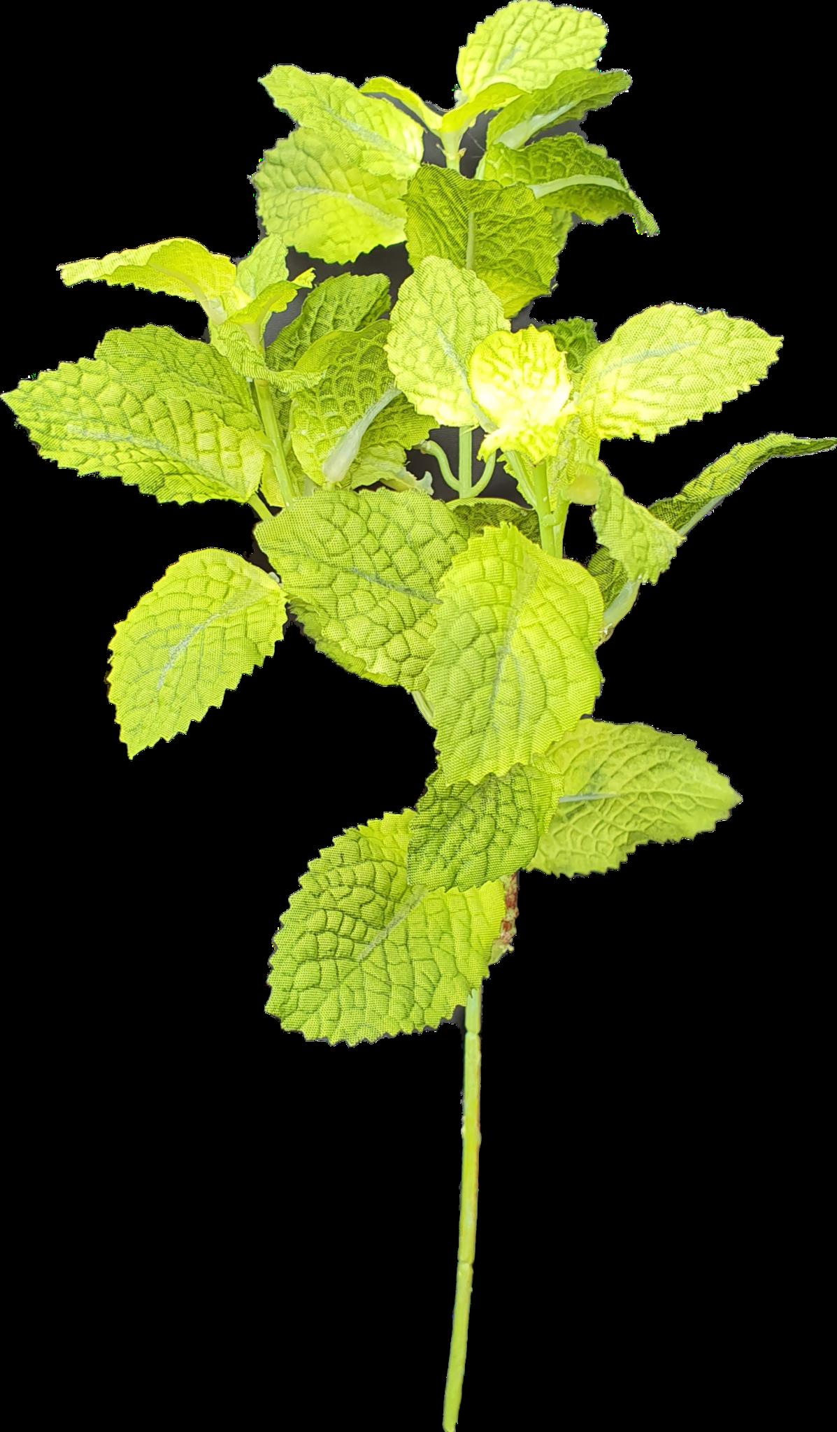 Mint pick green 28cm-1