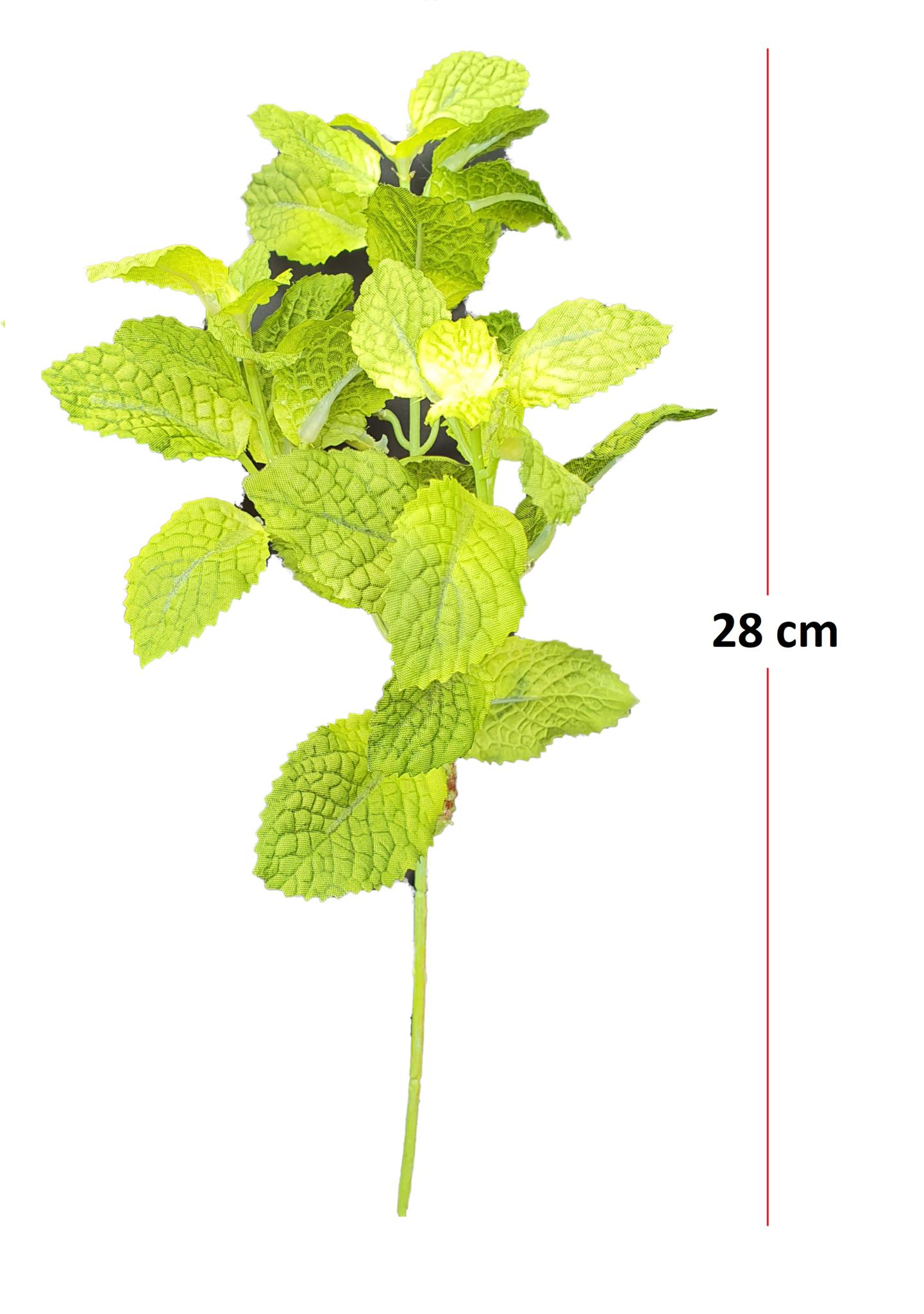 Mint pick green 28cm-2