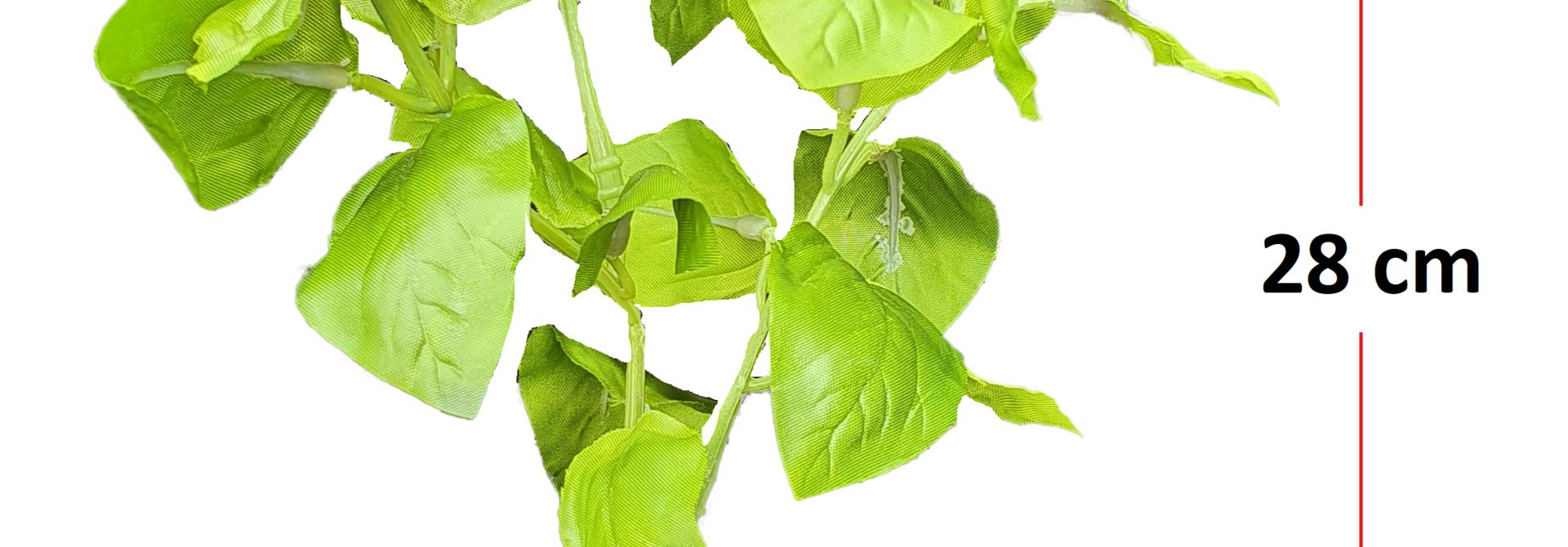 Basil green 28cm
