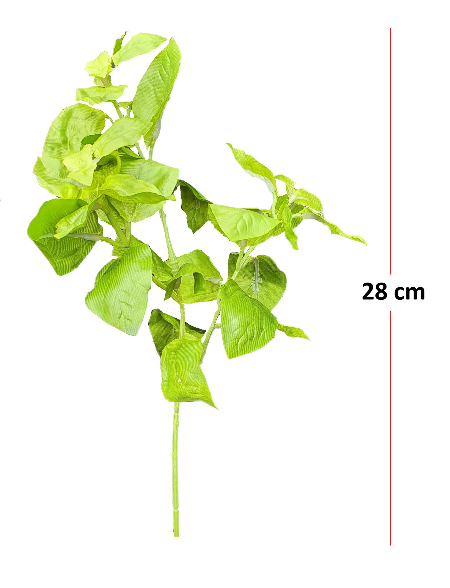 Basil green 28cm-1