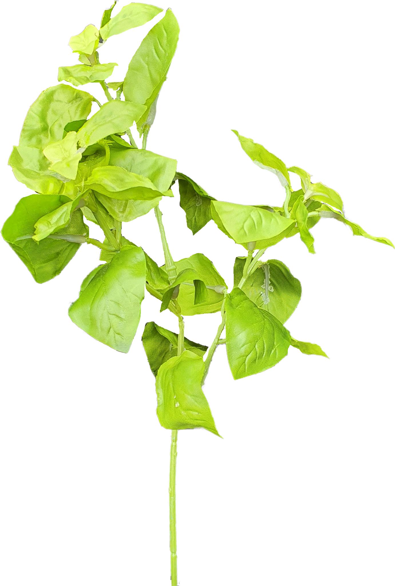 Basil green 28cm-2