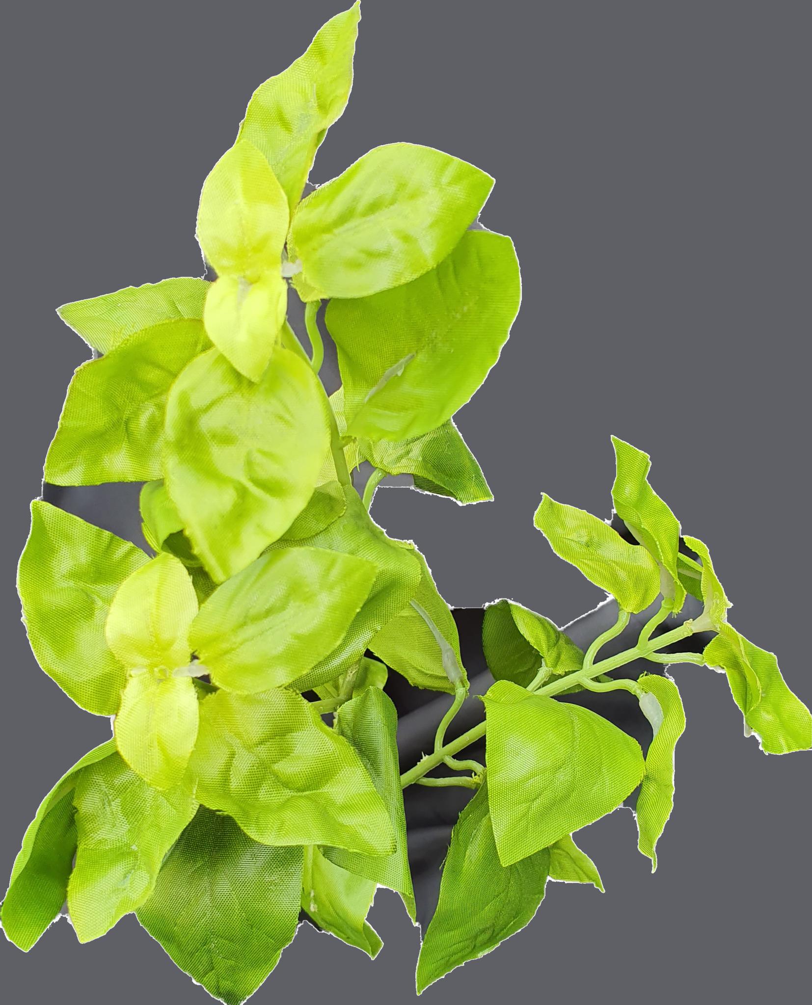 Basil green 28cm-3