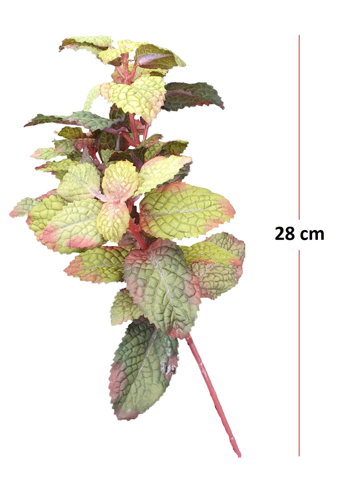 Mint pick burgundy 28cm-2