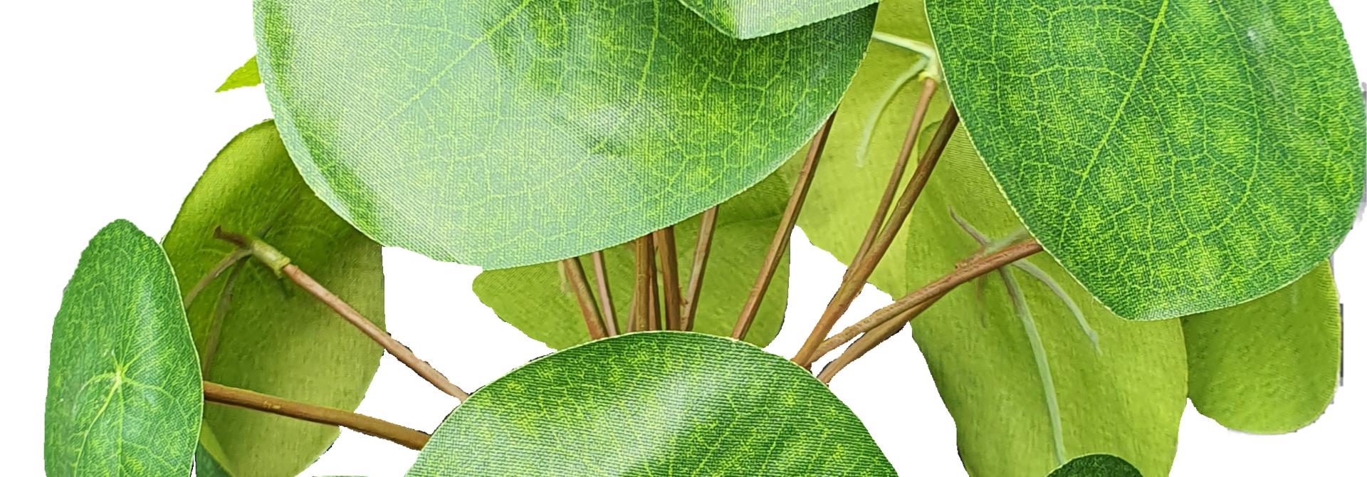 Pilea bush 22cm