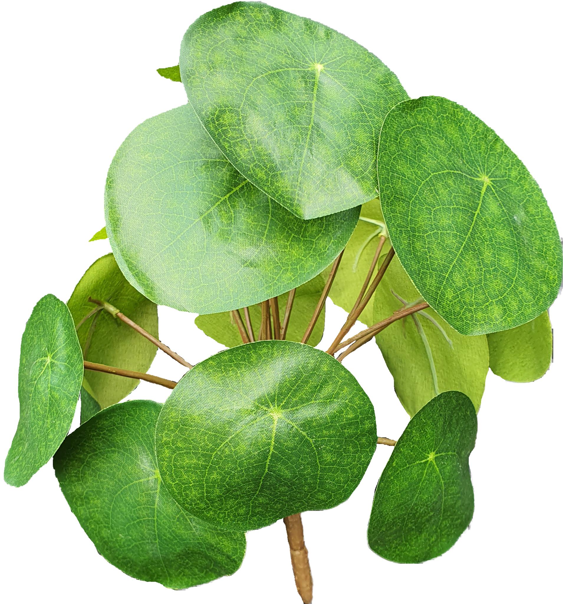 Pilea bush 22cm-1