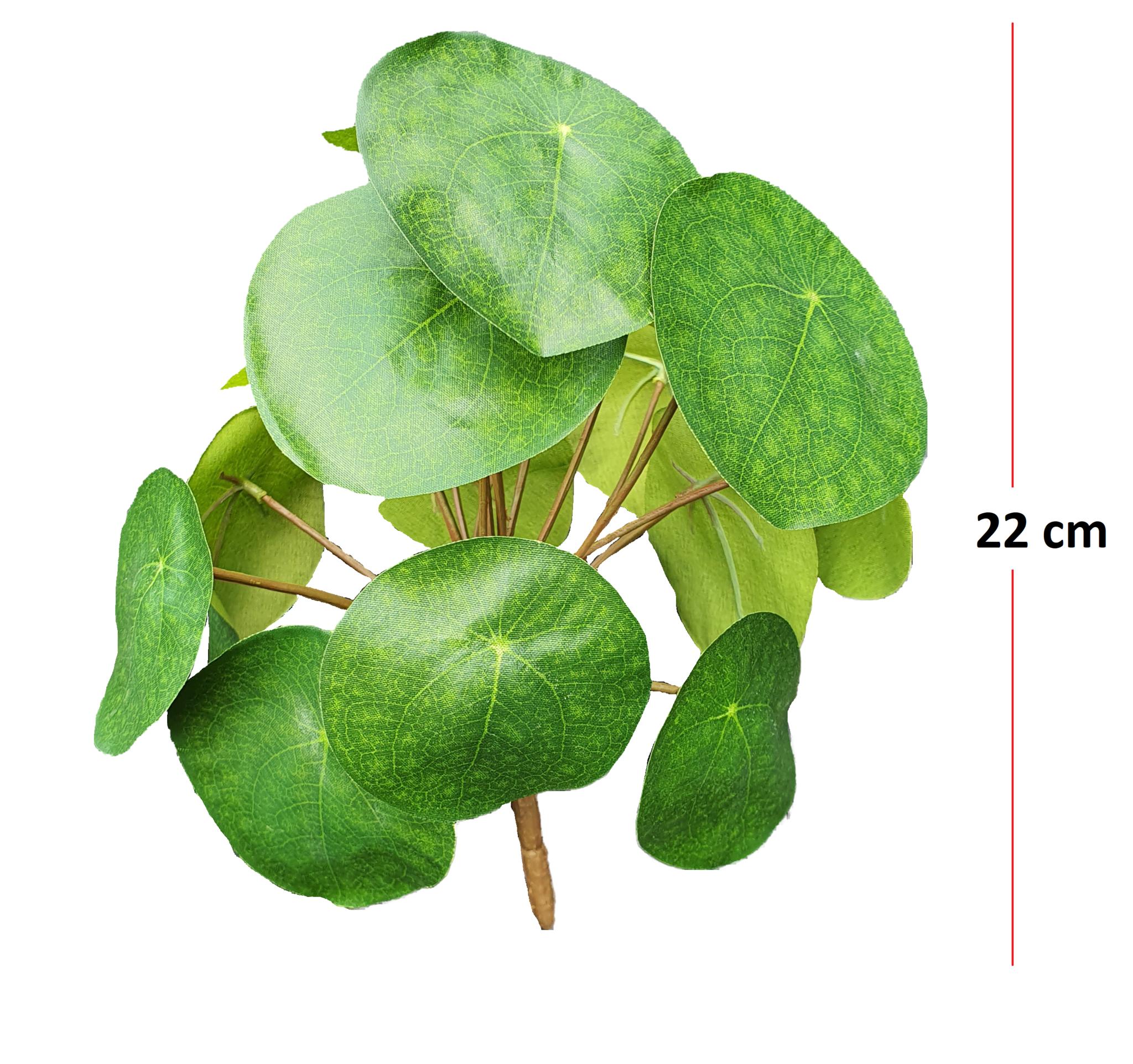 Pilea bush 22cm-2