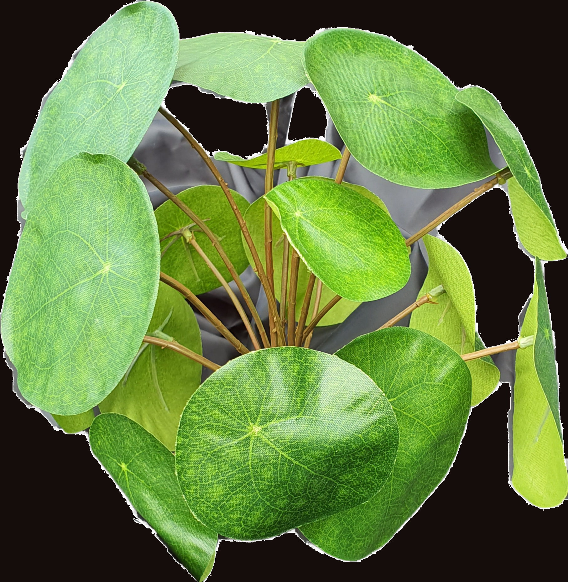 Pilea bush 22cm-3