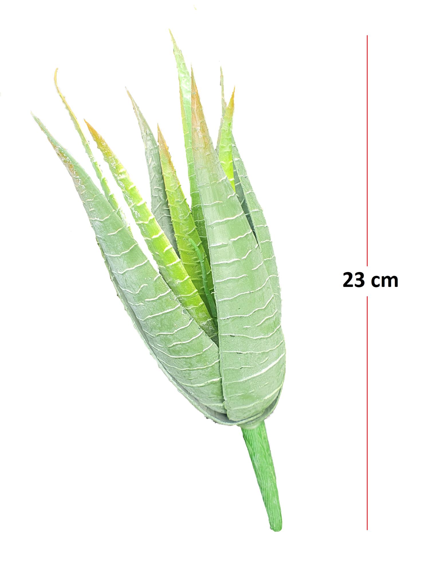 Aloe vera 23cm-2