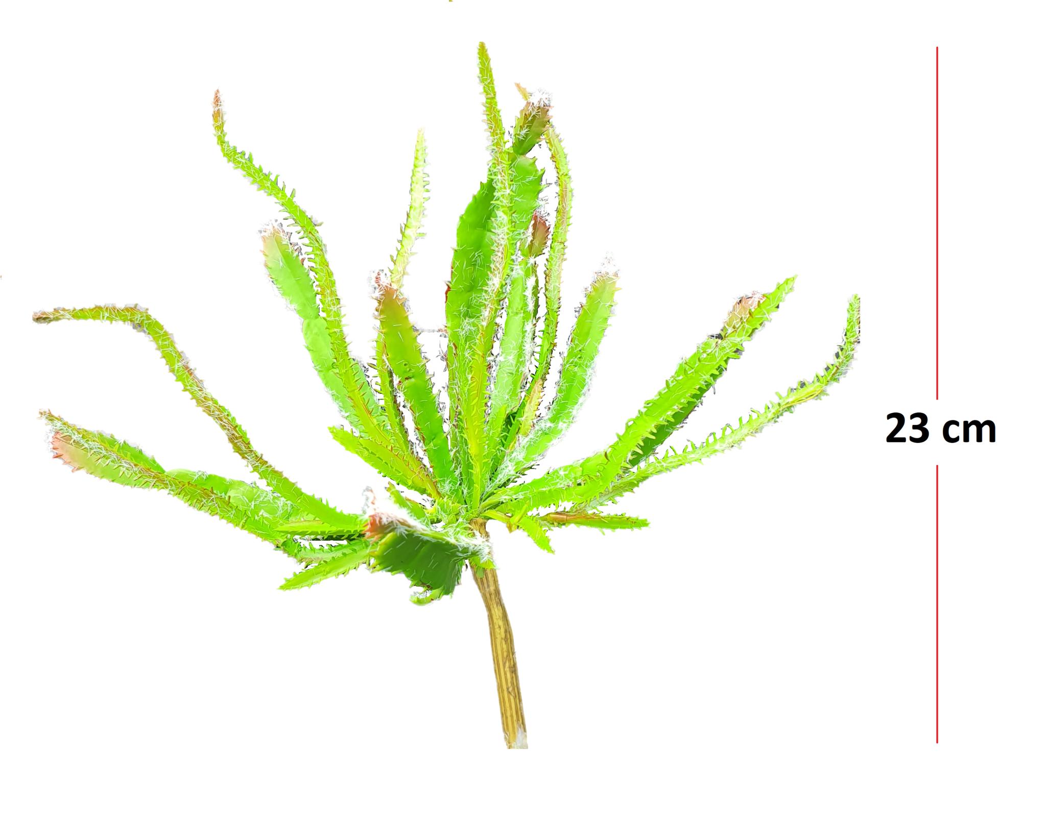 Euphorbia bush 23cm-2