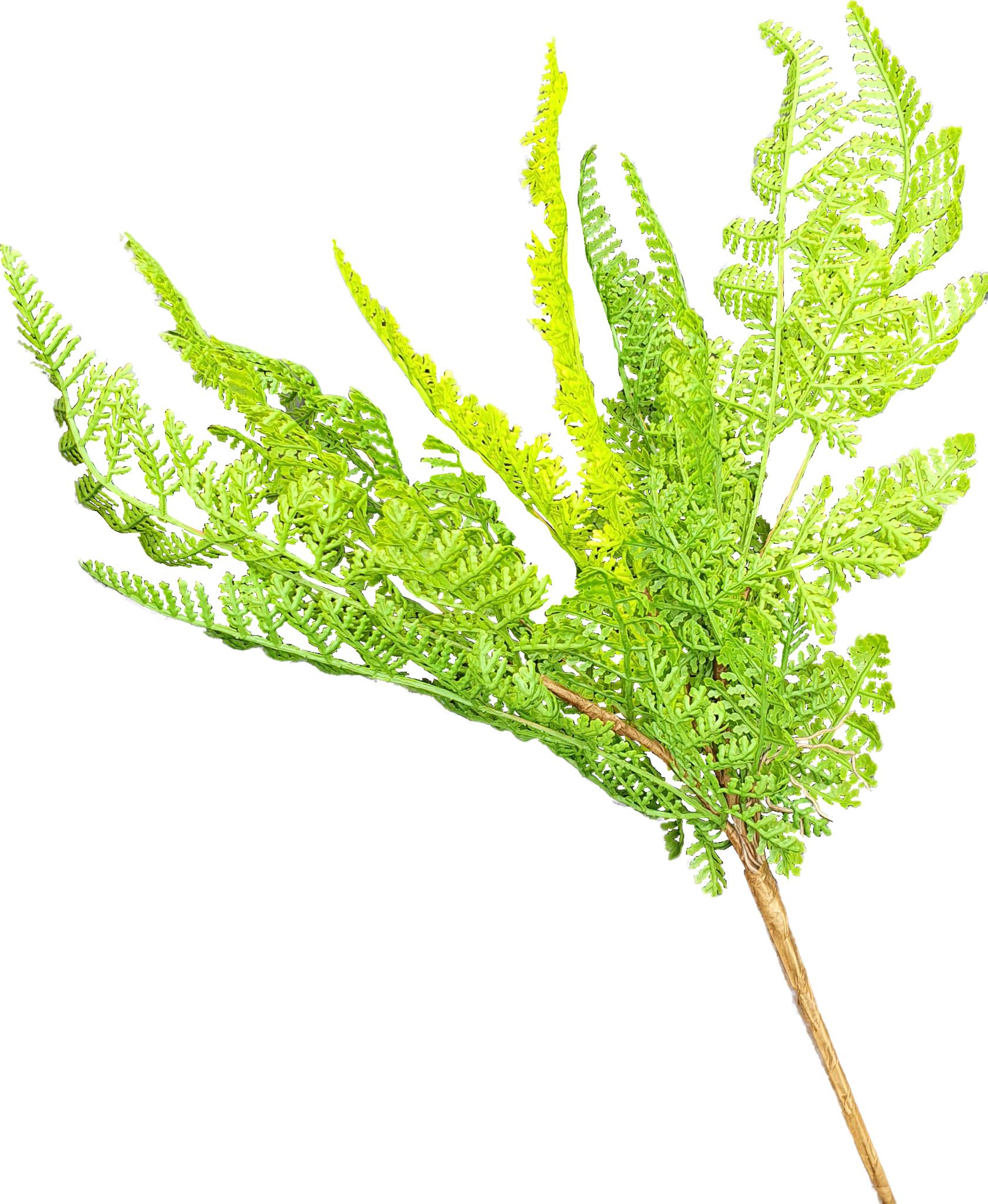 Fern forest bush 30cm-1