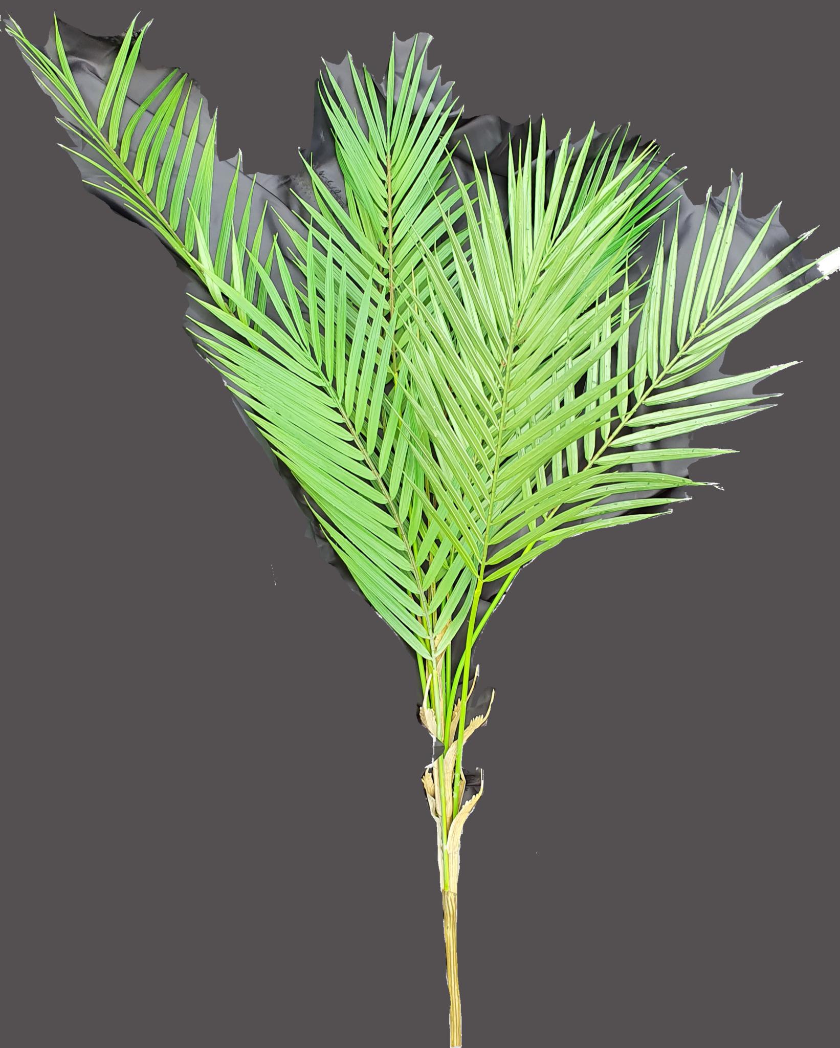 Fern forest bush 30cm-3