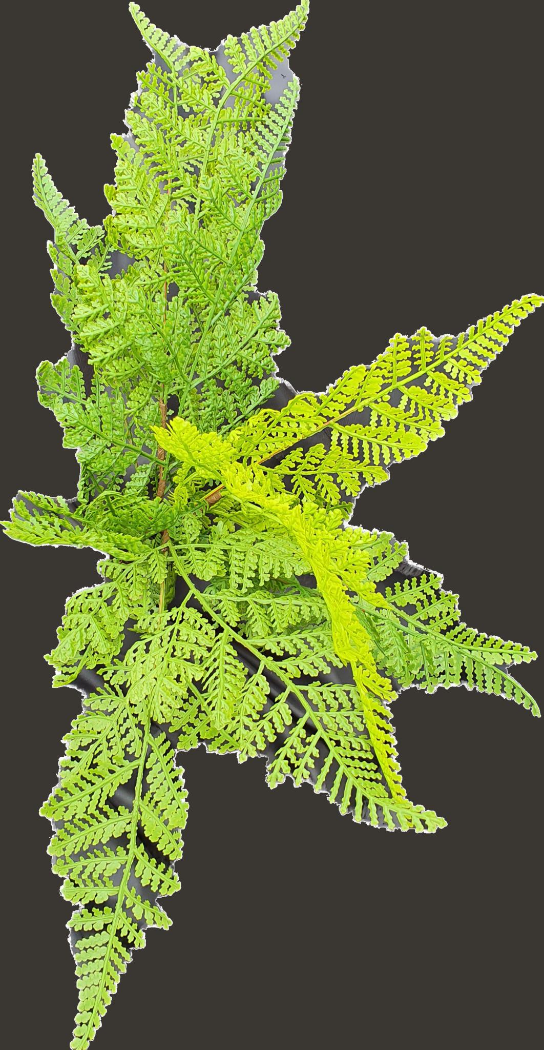 Fern forest bush 30cm-4
