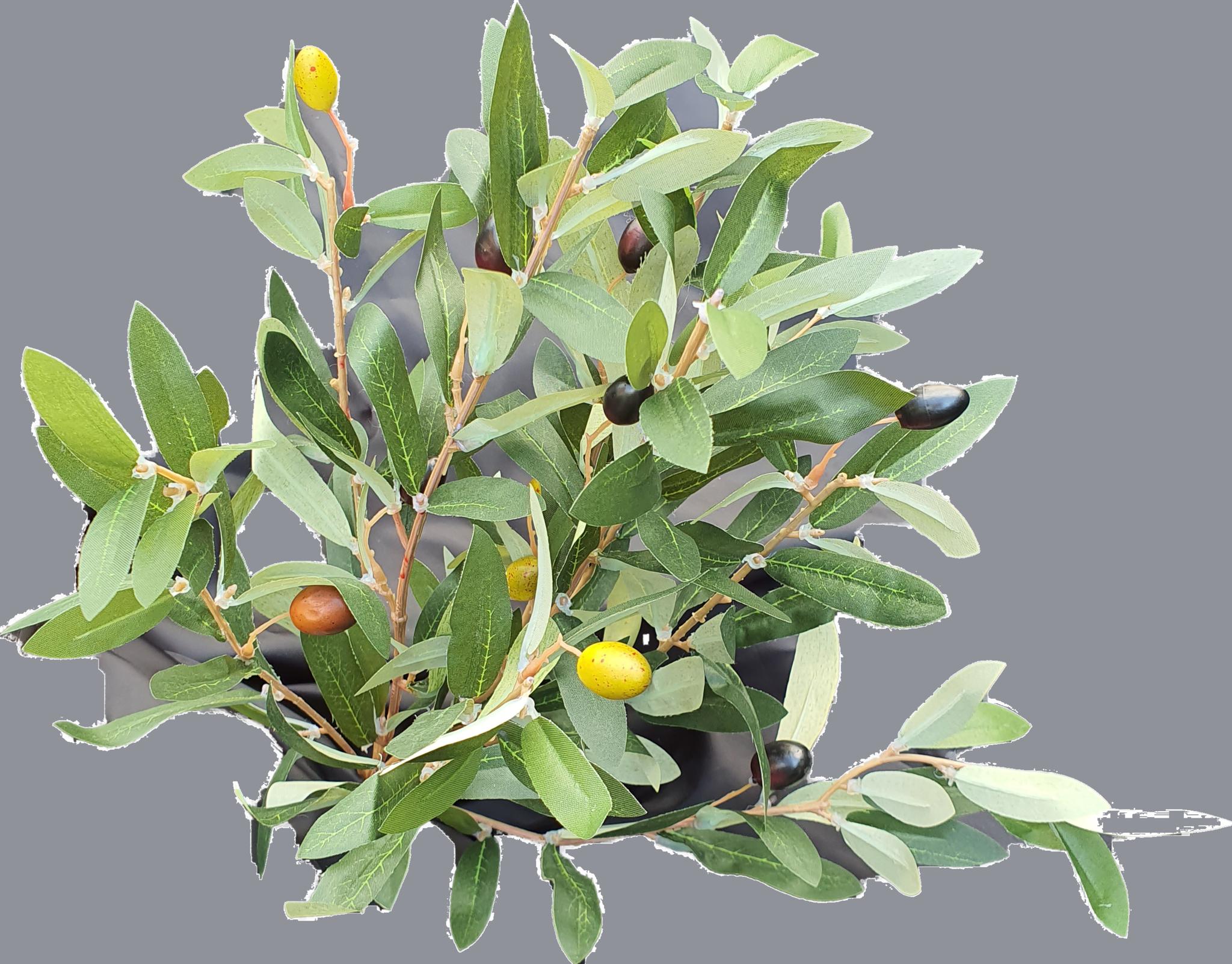 Olive bush 35cm green-2