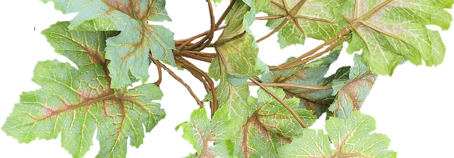 Heuchera bush 28cm tt green