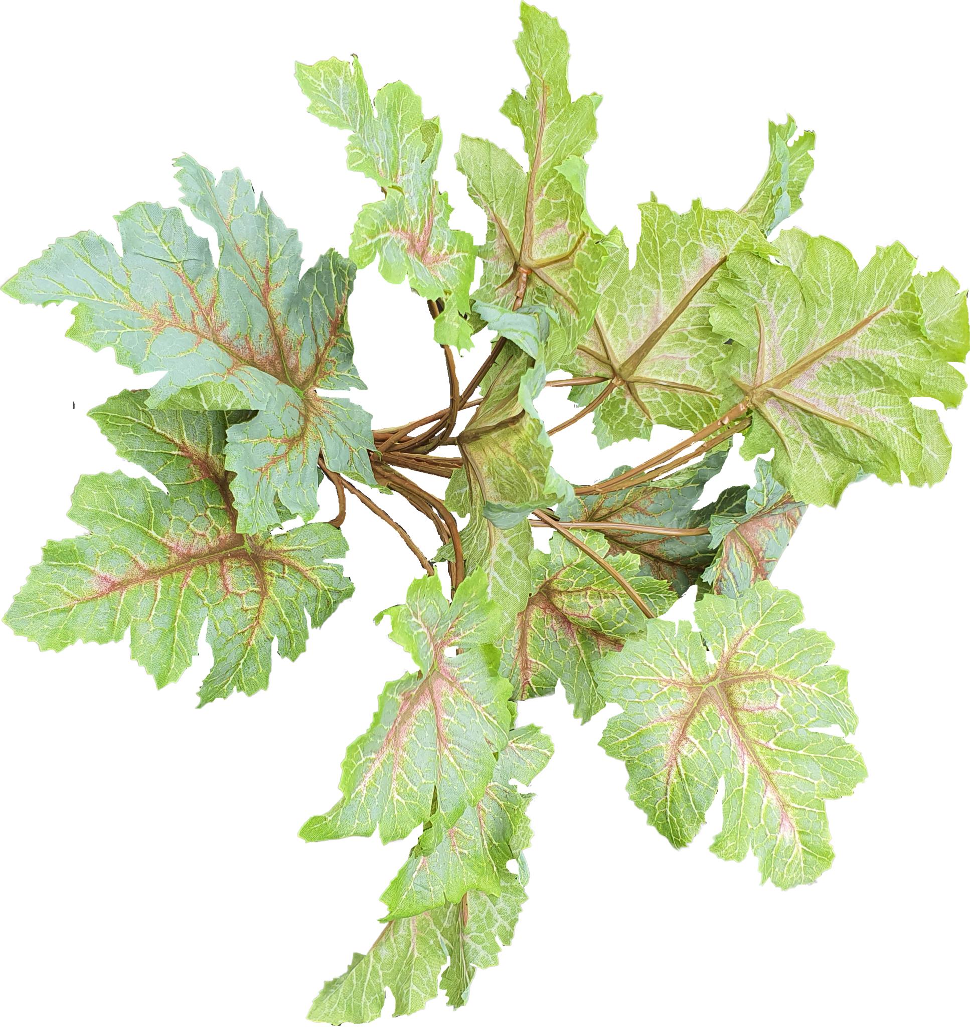 Heuchera bush 28cm tt green-1
