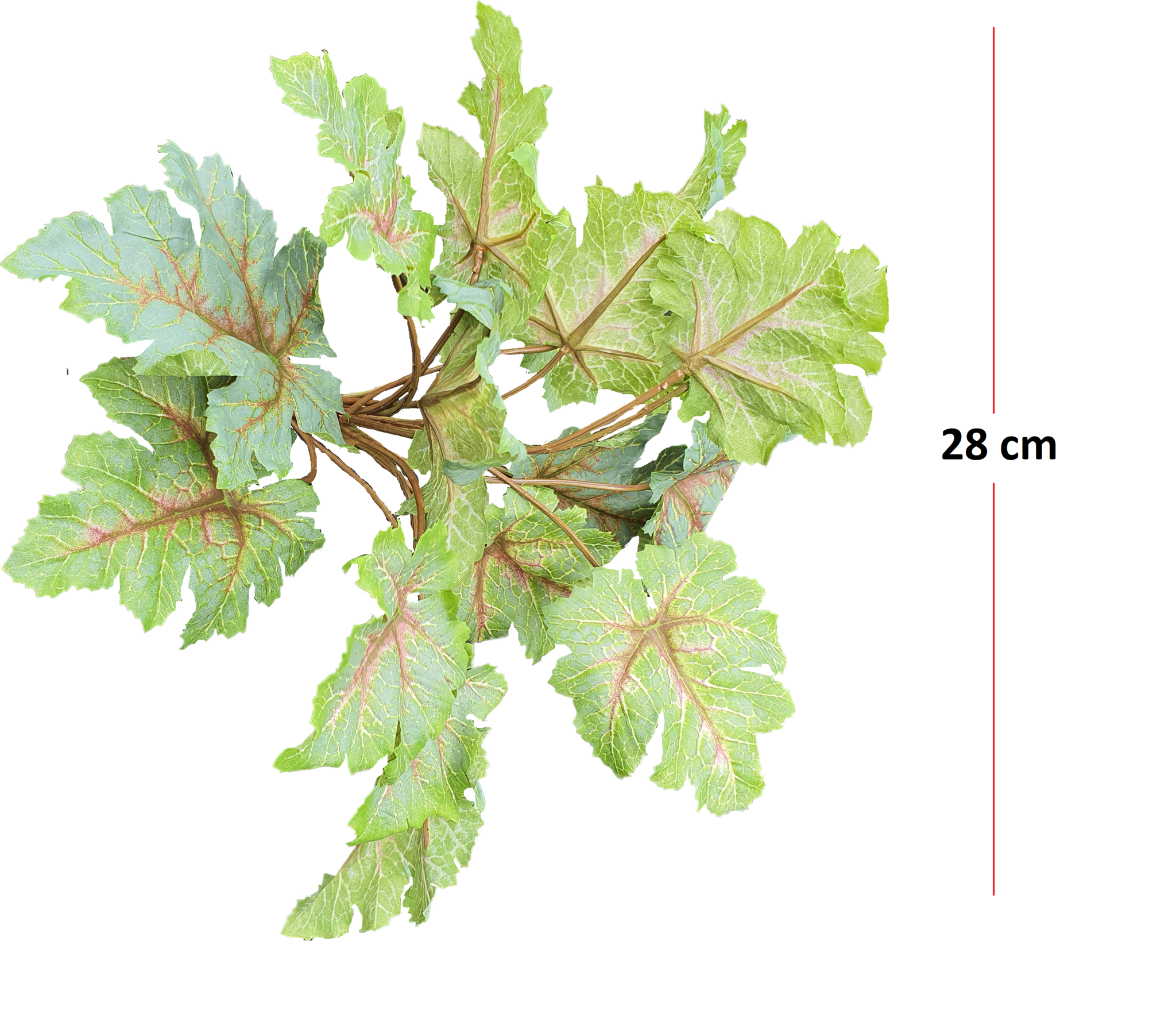 Heuchera bush 28cm tt green-2