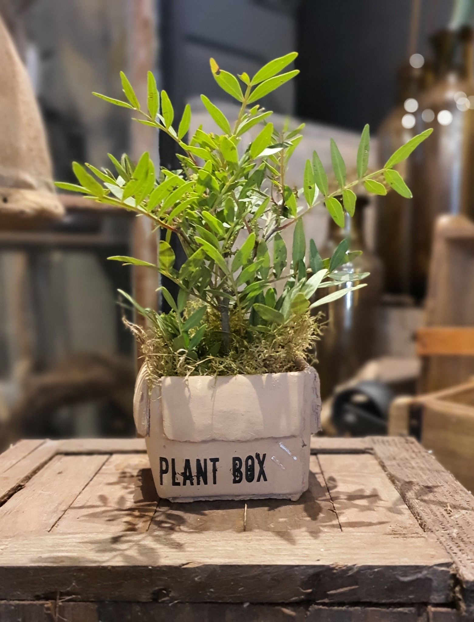 pot ceramic plant box 11-2
