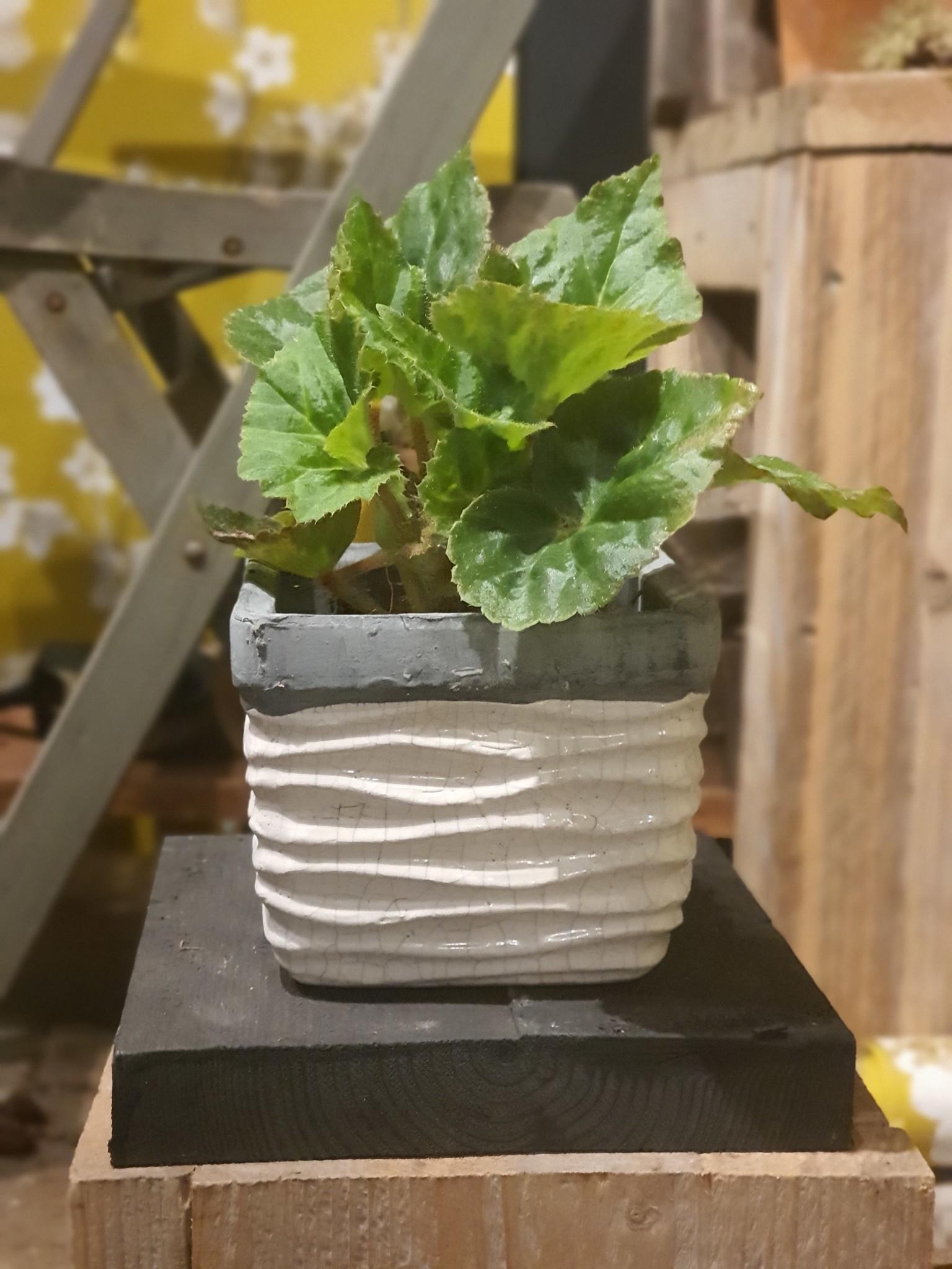 pot ceramic sqaure ribbed pot 13,5-2