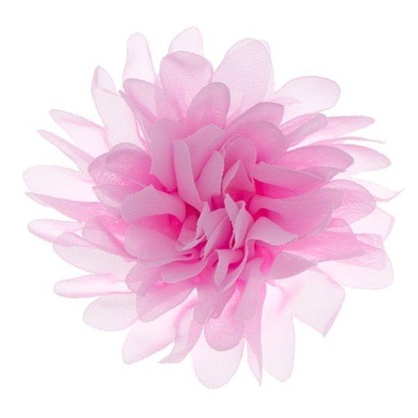 Goudhaartje Haarbloem dahlia roze