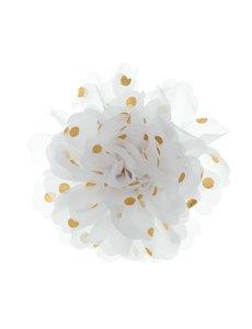 Goudhaartje Haarbloem goudkleurige stip wit
