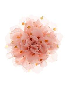 Goudhaartje Haarbloem goudkleurige stip roze