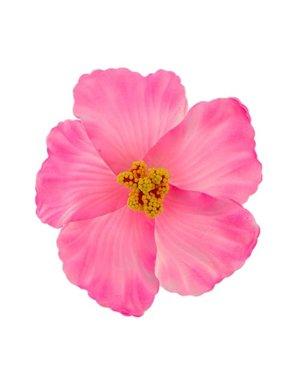 Goudhaartje Haarbloem large bright pink