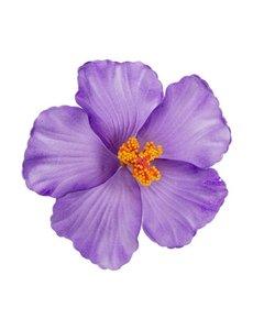 Goudhaartje Haarbloem large bringt purple