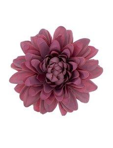 Goudhaartje Haarbloem chrysant paars