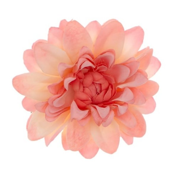 Goudhaartje Haarbloem chrysant roze