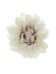 Goudhaartje Haarbloem chrysant wit