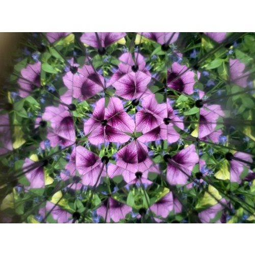 Huckleberry Huckleberry - Kaleidoscope