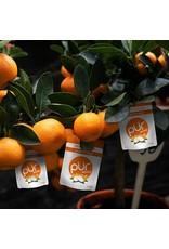 Pür Pür Tangerine Tango Mints