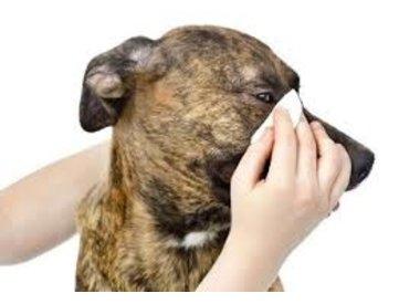 oor- oog en tandverzorging