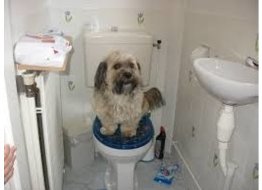 Toiletartikelen