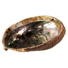 Abalone schelp (Nieuw-Zeeland)