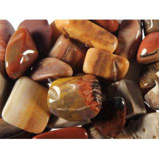 Versteend hout trommelstenen S (50 gram)