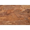 Wandkork platte - Cork Forest Back - 60 x 90 cm