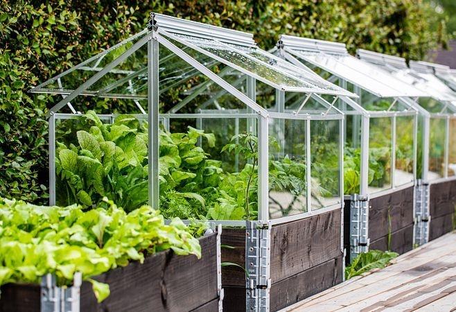 Nadstawki paletowe mogą stanowić inspekt dla sadzonek